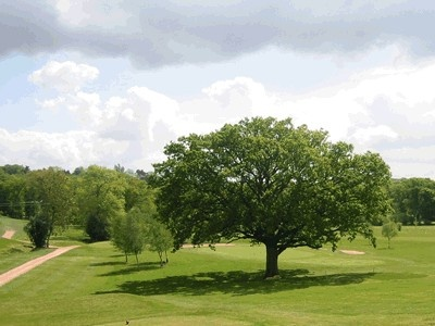 cranleigh_oak_tree